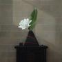 Michael Vincent Murphy – Magnolia – acrylic on canvas, 76 x76cm, $4500